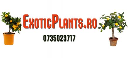 Plante Exotice de Vanzare