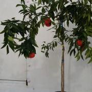 mandarin anul 3 (4)