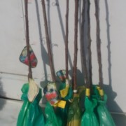 pomi fructiferi altoiti ambalati3