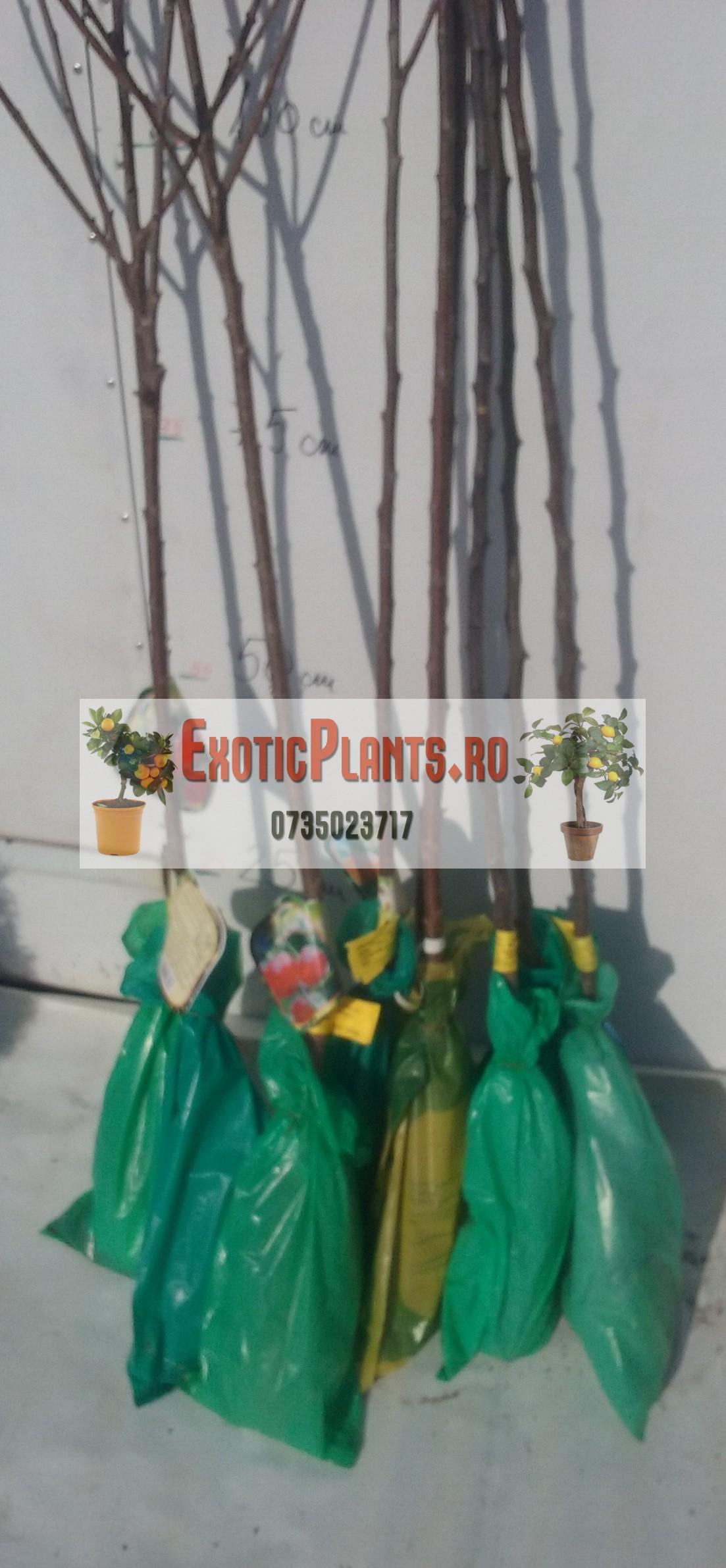 Pomi fructiferi ambalati